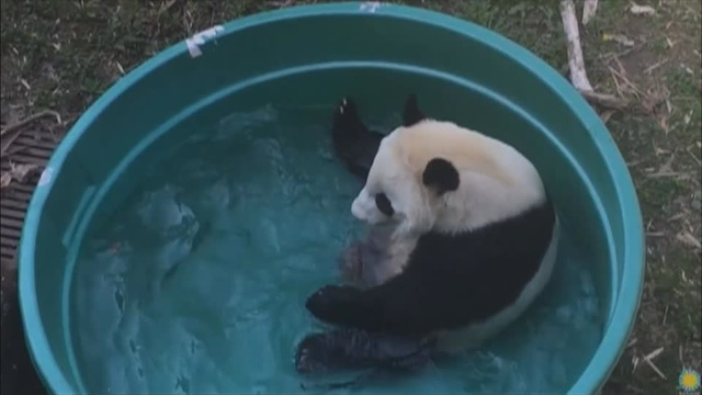 National Zoo to bid Bei Bei, bye bye