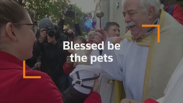 A blessing for all - Madrid's pets to go church