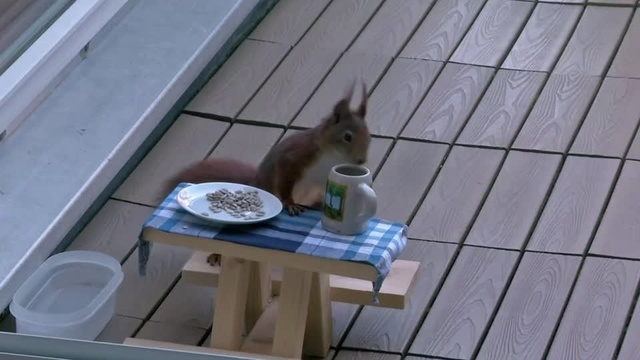Meet the squirrel given its very own beer garden